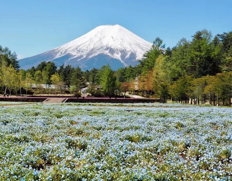 モネフィラと富士山